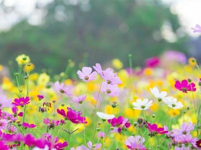 Primavera predispõe a doença na córnea